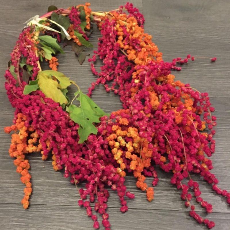 red-quinoa-Taiwan-2