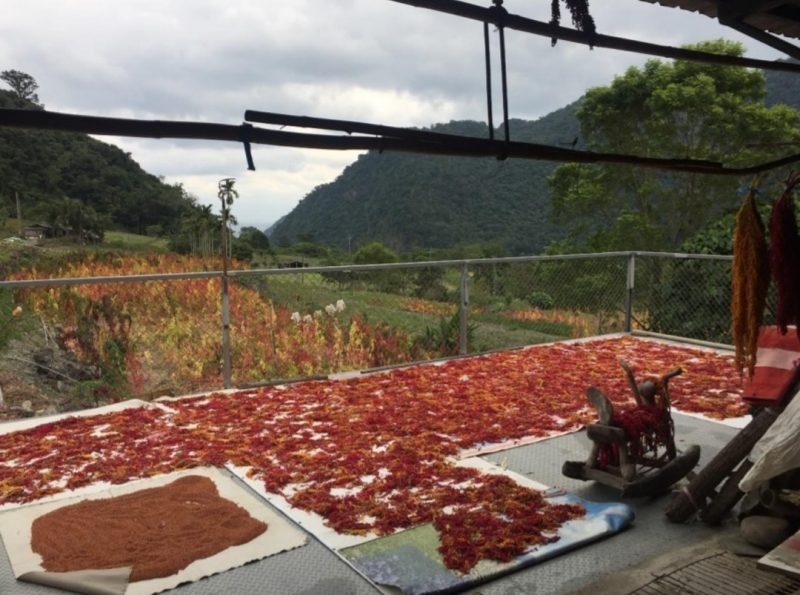 紅藜與它們的產地:台灣藜的華麗轉身與地方生活的再連結/廖慧雅