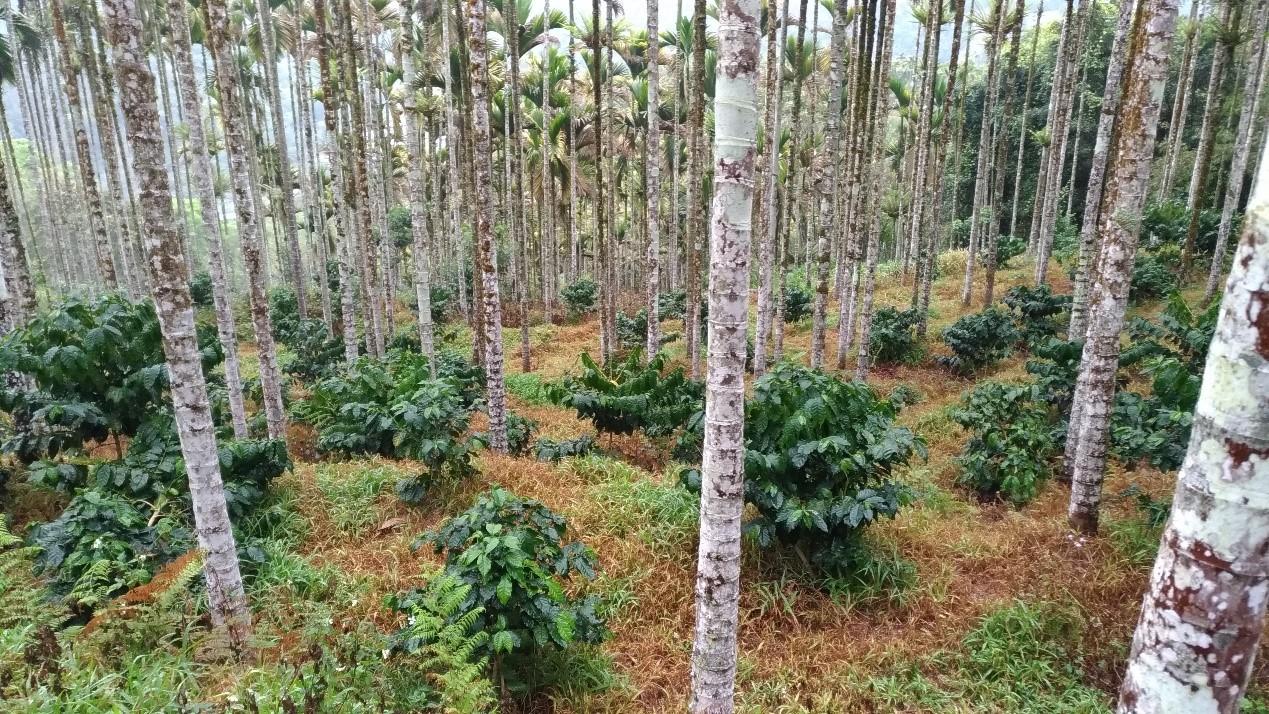 異質精品化:國際評鑑準則與魚池咖啡在地技術/黃獻緯