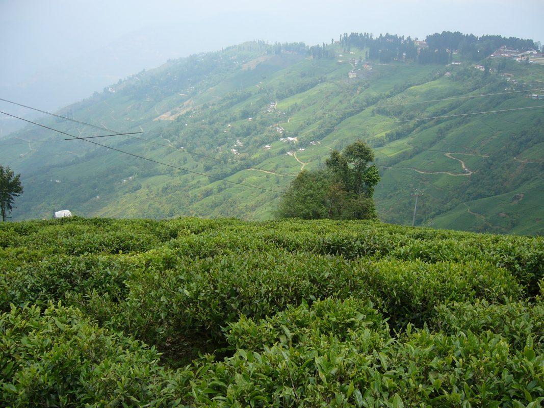 殖民開發地理學下的西孟加拉邦茶園/陳奕儒