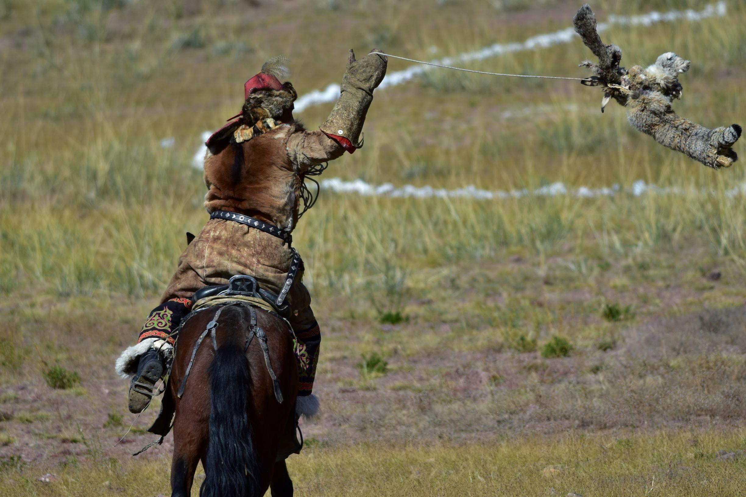 拋出毛皮,模擬在動的獵物,訓練金雕前來捕抓。