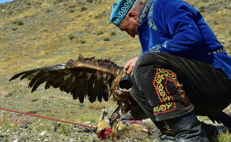 鷹獵文化 ( 三 ) :觀光與現代鷹獵的困境 / 廖珮岑